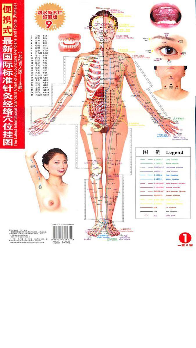 便携式最新国际标准针灸经络穴位挂图(女性真人版)