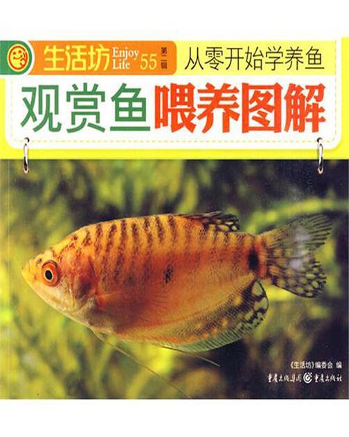 观赏鱼喂养图解
