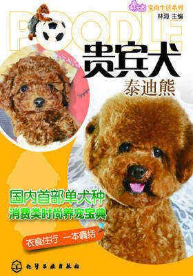 贵宾犬:泰迪熊