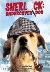 侠肝义犬(影视)