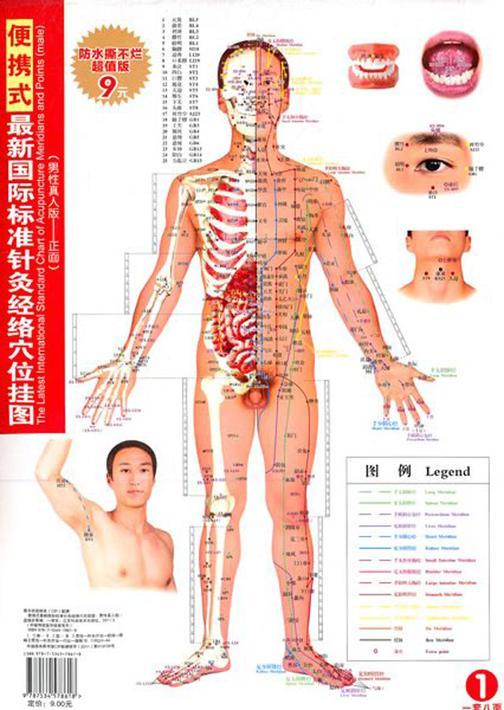 便携式最新国际标准针灸经络穴位挂图(男性真人版)