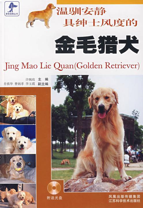 温驯安静具绅士风度的金毛猎犬