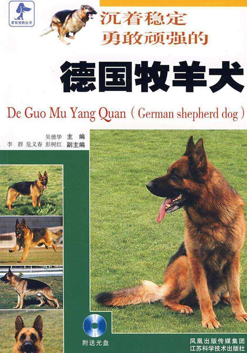 沉着稳定勇敢顽强的德国牧羊犬