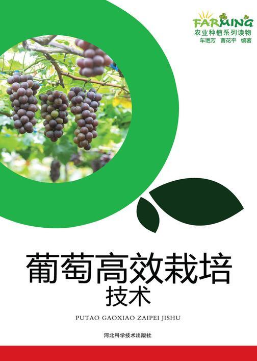 葡萄高效栽培技术