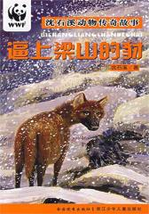 逼上梁山的豺(沈石溪动物传奇故事)