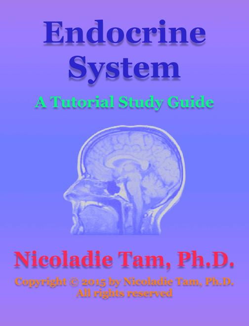 Endocrine System: A Tutorial Study Guide