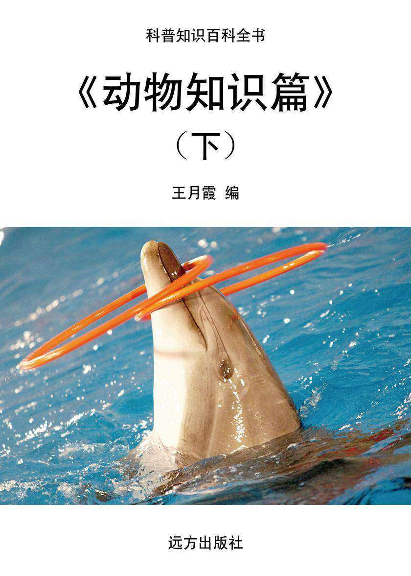 动物知识篇(下)