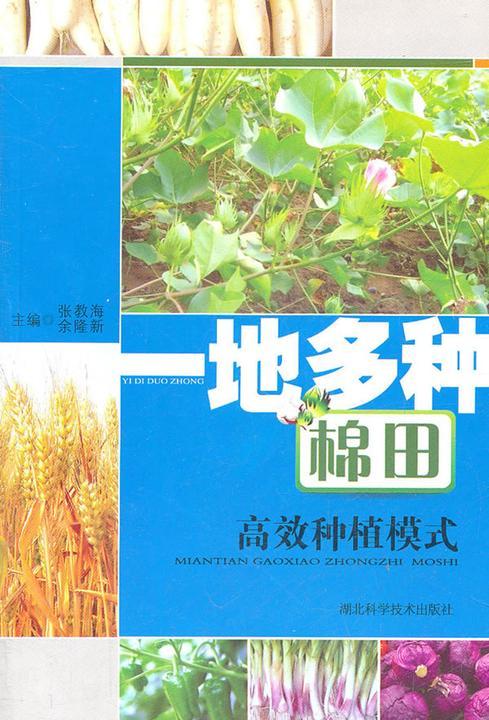 一地多种棉田高效种植模式