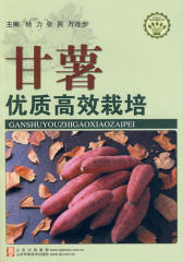 甘薯优质高效栽培