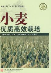 小麦优质高效栽培