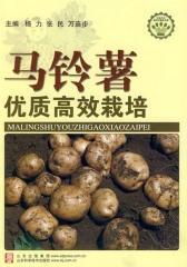 马铃薯优质高效栽培