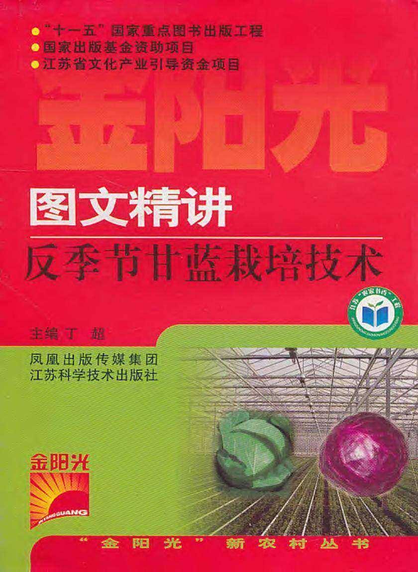 图文精讲反季节甘蓝栽培技术
