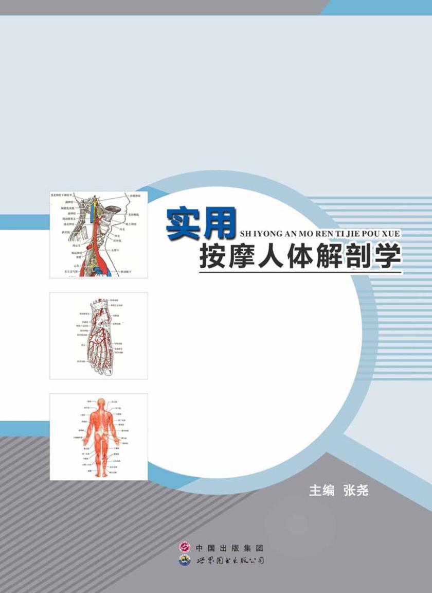 实用按摩人体解剖学
