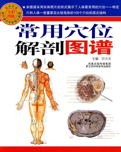 常用穴位解剖图谱