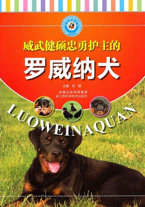 威武健硕忠勇护主的罗威纳犬