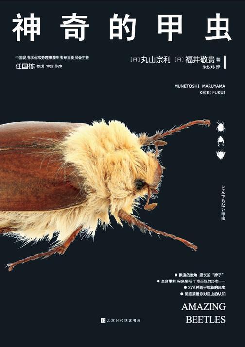 神奇的甲虫