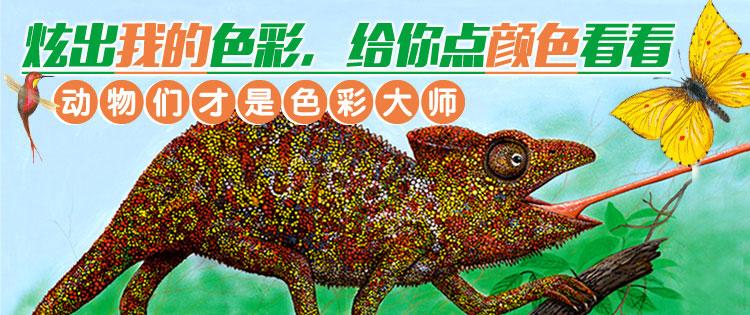 色彩大师动物